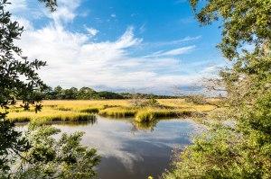 Green Marsh Grasses Under Blue Sky