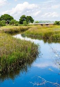 Blue Creek Through Green Marsh Grass