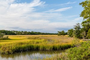 Golden Green Marsh Under Blue Skies