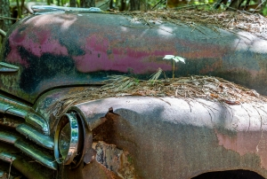 Seedling of a small plant growing in pinestraw on the rusty bumper of an old truck